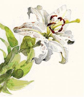 fiore ambrogio