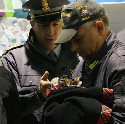 Rimini, denunciata attività per frode del commercio e maltrattamento di animali