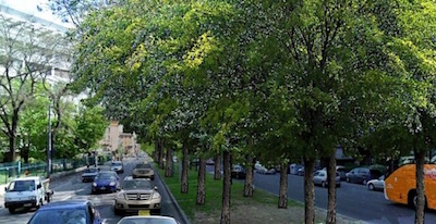Rinnovo delle alberature lungo un tratto di viale Silvani, al quartiere Porto