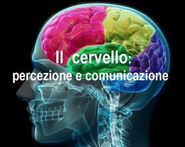 Il cervello e i suoi meccanismi di percezione e comunicazione spiegati agli studenti