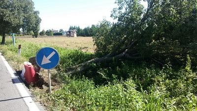 Castelfranco sp 14 albero-1