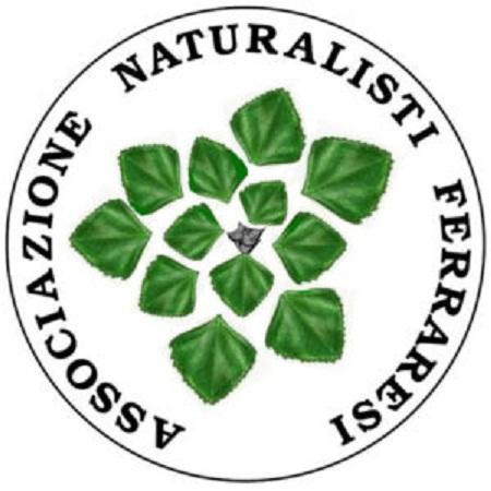 logo_anf