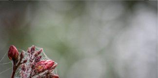 6-attimi-di-pianura-rugiada-tra-i-fiori-fabio-grandi-foto