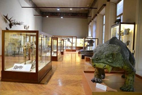museo-di-storia-naturale-ferrara-teche