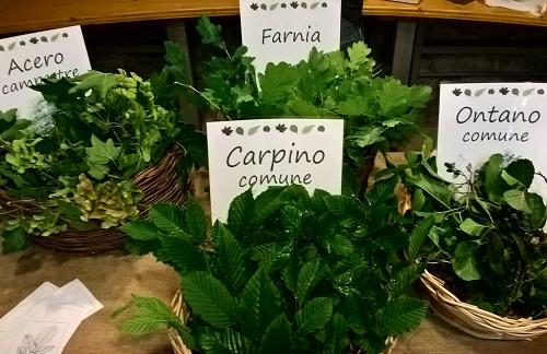 Terramara Le piante raccontano