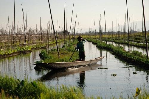 giardini-fluttuanti-michelapasquali-da-articolo-manifesto-inle-lake-burma-floating-gardens-4
