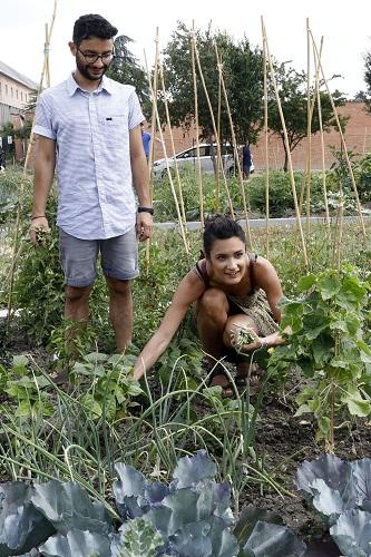 orti urbani giovani coltivatori 170617