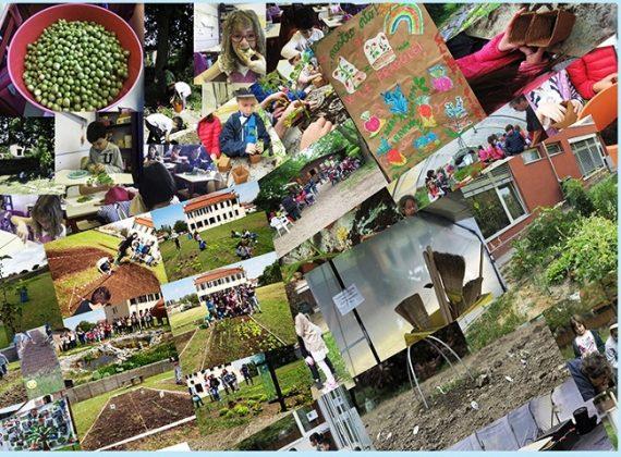 """""""Diritto all'ambiente, l'orto va a scuola"""": mostra ..."""