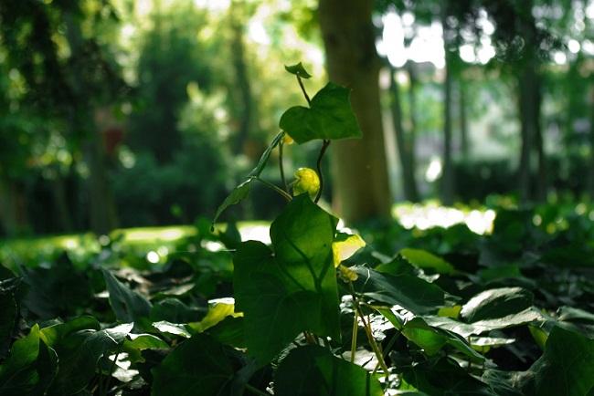 Interno Verde 6 foto Silvia Franzoni