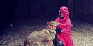 cappuccetto rosso e il lupo ceco